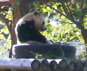 20051117_panda.jpg