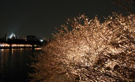 20060608_sakura.jpg